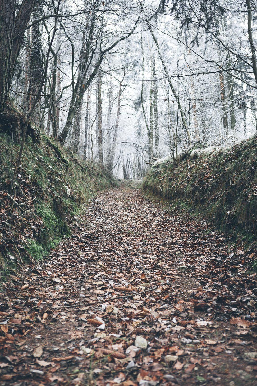 Waldweg Theyern