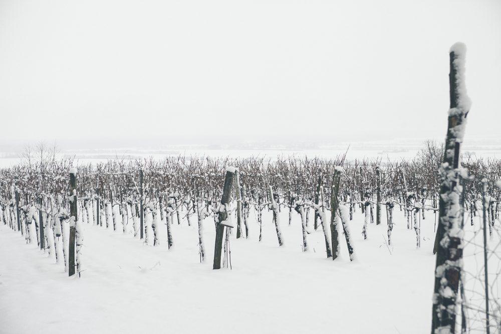Verschneite Weinberge